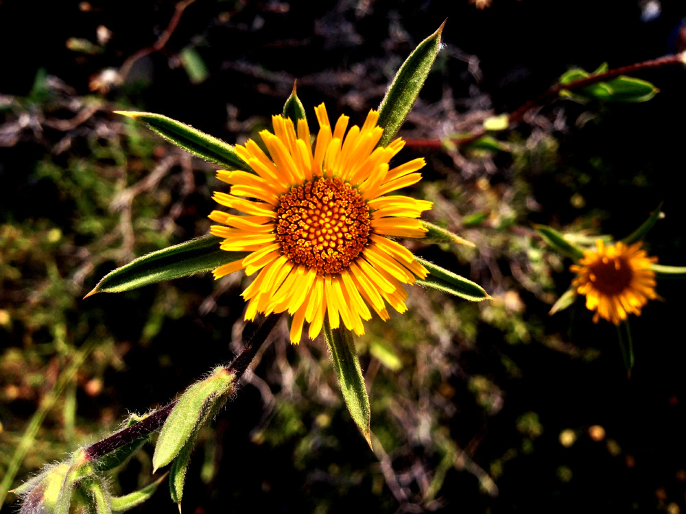 Free Yellow Flower Photo