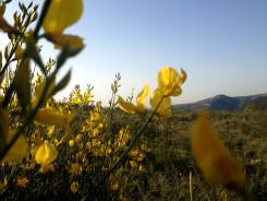 Yellow Flowers Free Photo