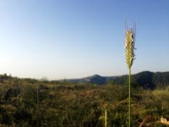 Blue Sky & Green Fields